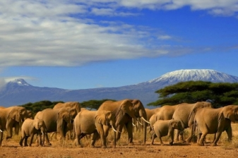 Wildlife Expedition to Amboseli National Park