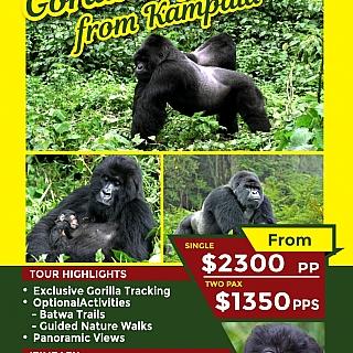 Gorilla Express from Kampala