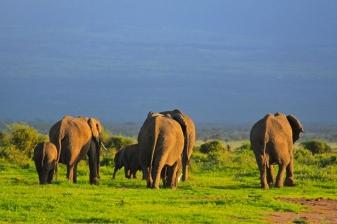 Travel Offer to Amboseli –Nakuru – Maasai Mara