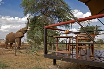 Bush Getaway to Ashnil Samburu Camp
