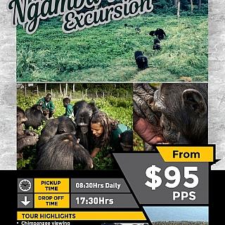 Ngamba Island excursion