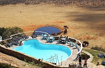 Holiday Discount at Voi Safari Lodge