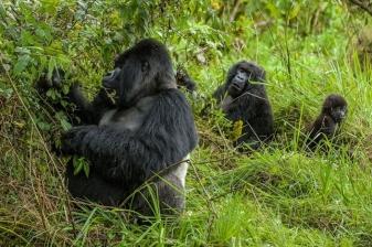 4 Day Gorilla Trek Getaway