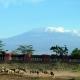 Amboseli Serena wildlife