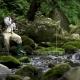 Serena Mountain Trout Fishing