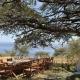 Mbweha Camp Picnic