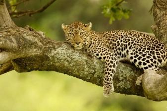 Safari Escape to Amboseli National Park