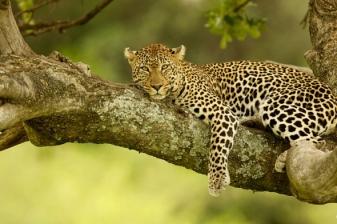 Safari Getaway to Amboseli Serena Lodge
