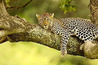 3 Days 2 Nights Getaway to Amboseli Serena Lodge
