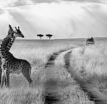 Serengeti Park and Ngorongoro Crater Easter Adventure - 4 Nights