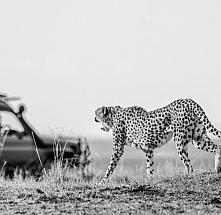 Maasai Mara Adventure-2 nights 3 Days
