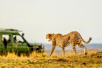 Maasai Mara Adventure-2 nights 3 Days