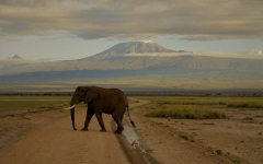 Why Amboseli Should Be Your Next Travel Destination