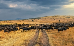 5 Facts About The Wildebeest Migration That You Probably Didn